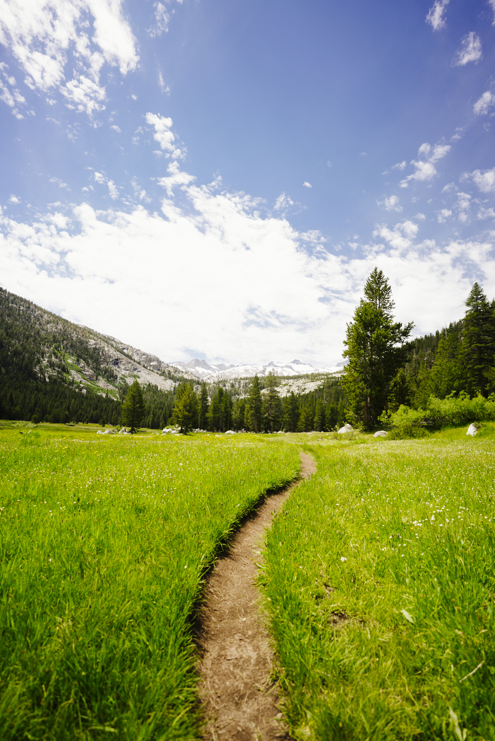 Trail through Lyell Canyon on the edge of Yosemite National Park.