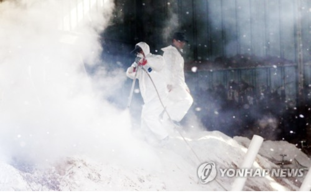 Quarantine officials disinfect a duck farm in Yeongam following an outbreak of highly pathogenic avian influenza on Dec. 11, 2017. (Source: Yonhap)