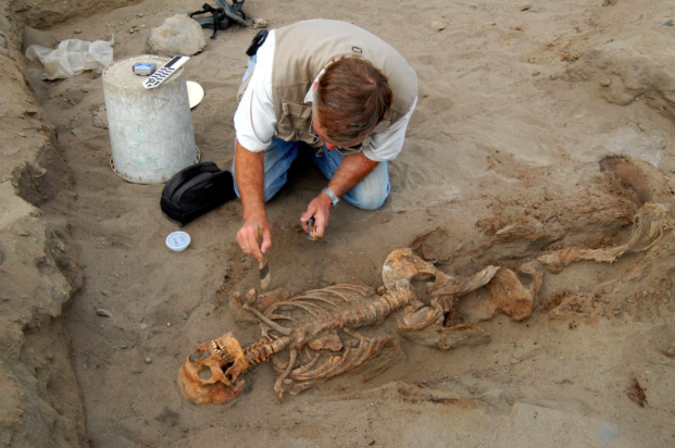 John Verano analyzing remains and trying to explain the possible motivations behind this unprecedented event in human history (National Geographic)