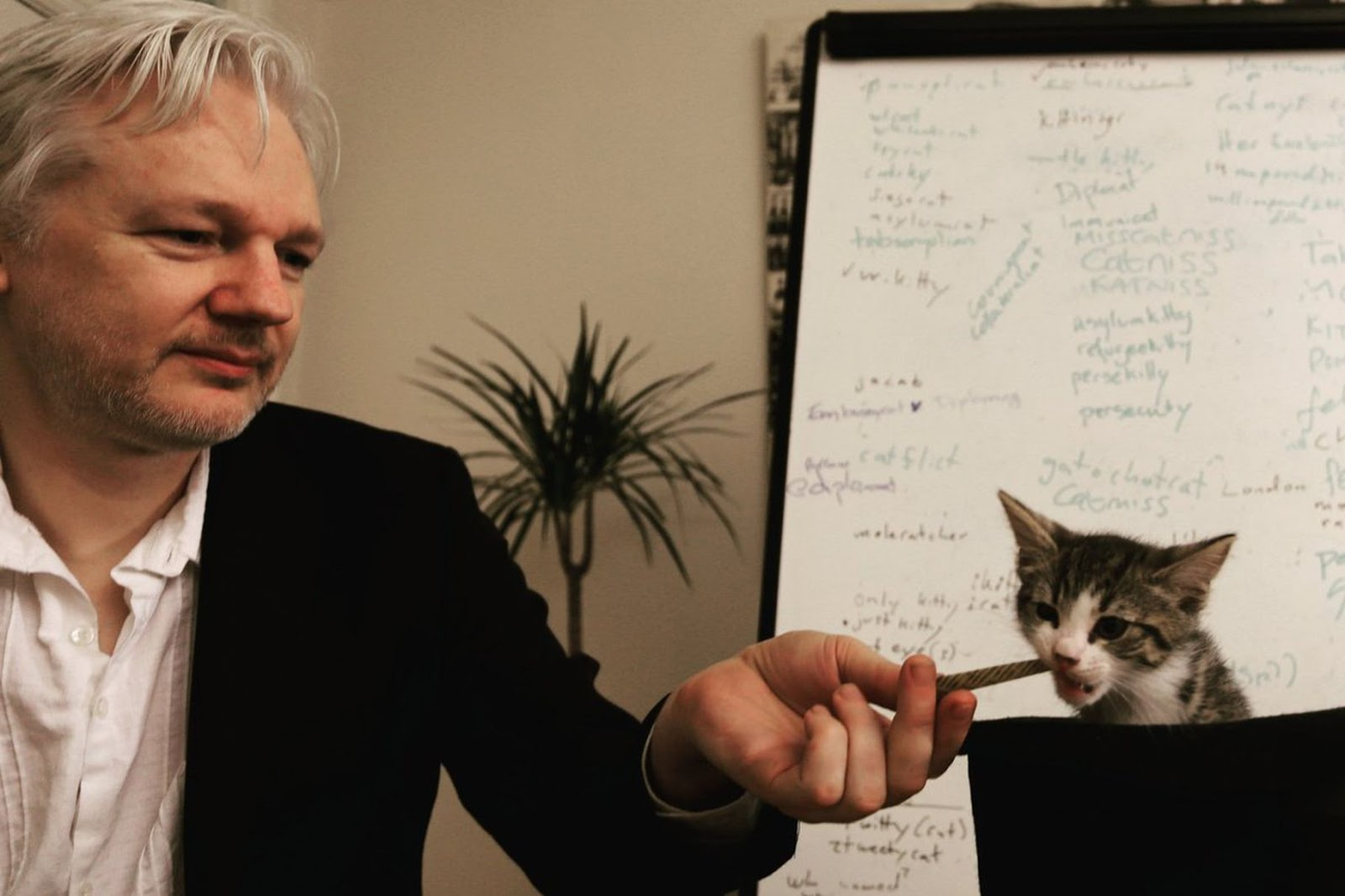 Assange and his cat  Photo: Embassy Cat/ Twitter