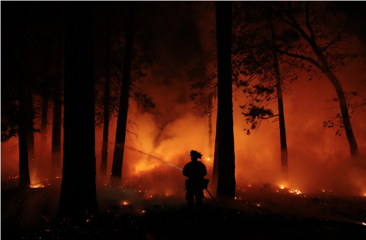 A firefighter sprays water on a controlled burn in California. Photo: John Locher/ AP