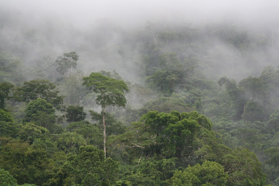Cloudy mists descend upon the lowland rainforest along the Alto Madre de Dios River. Photo:  Wendee Holtcamp