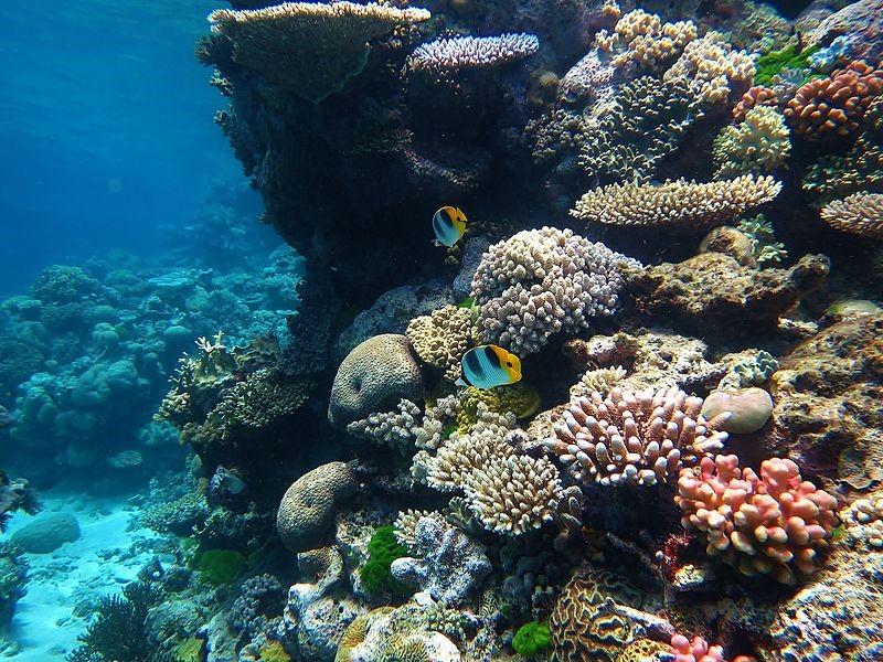 The Great Barrier Reef. Photo: Wise Hok Wai Lum/ Wikimedia Commons .
