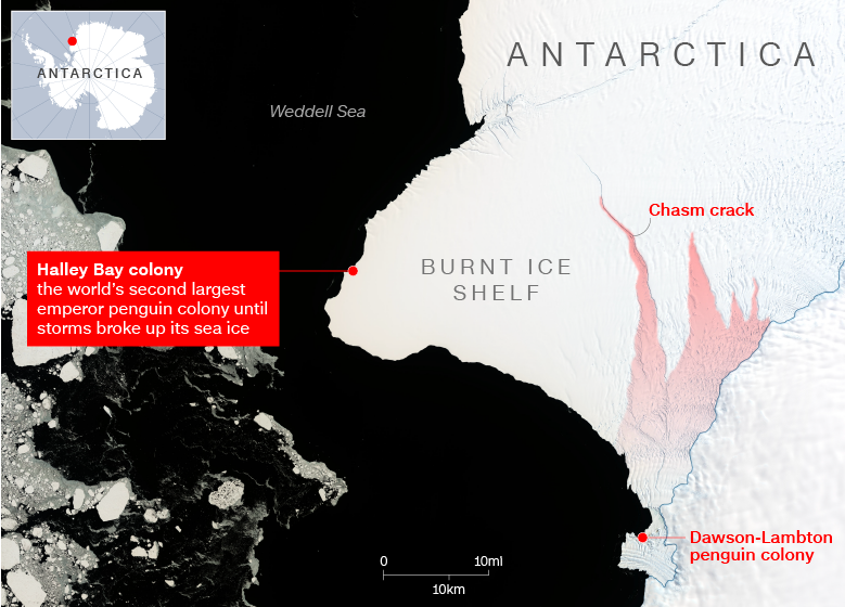 A map shows the Halley Bay and Dawson-Lambton emperor penguin colonies in the Weddell Sea, Antarctica. Photo:  CNN .