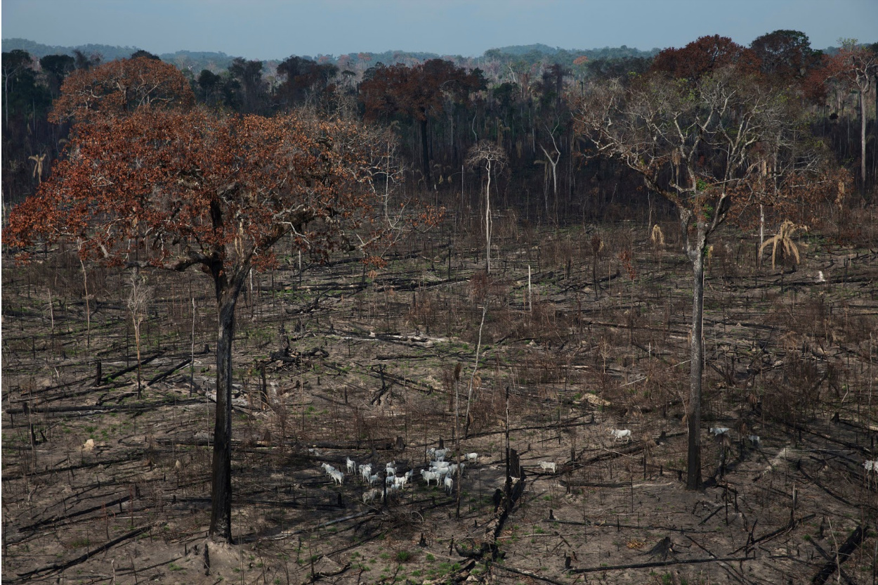 A portion of illegally cleared Amazon forest in Brazil. Photo:  New York Times