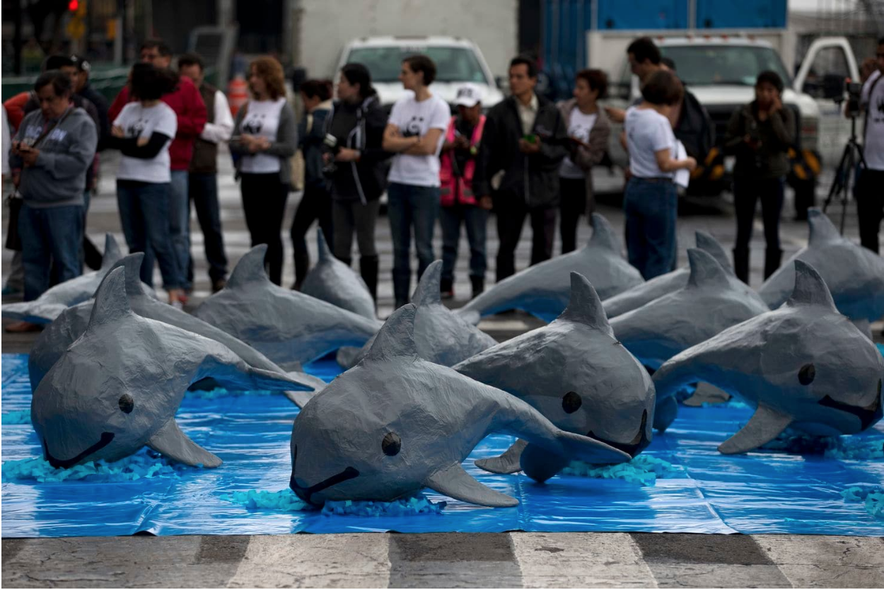A display of paper mache replicas of the endangered porpoise, in Mexico City. Photo:  Washington Post