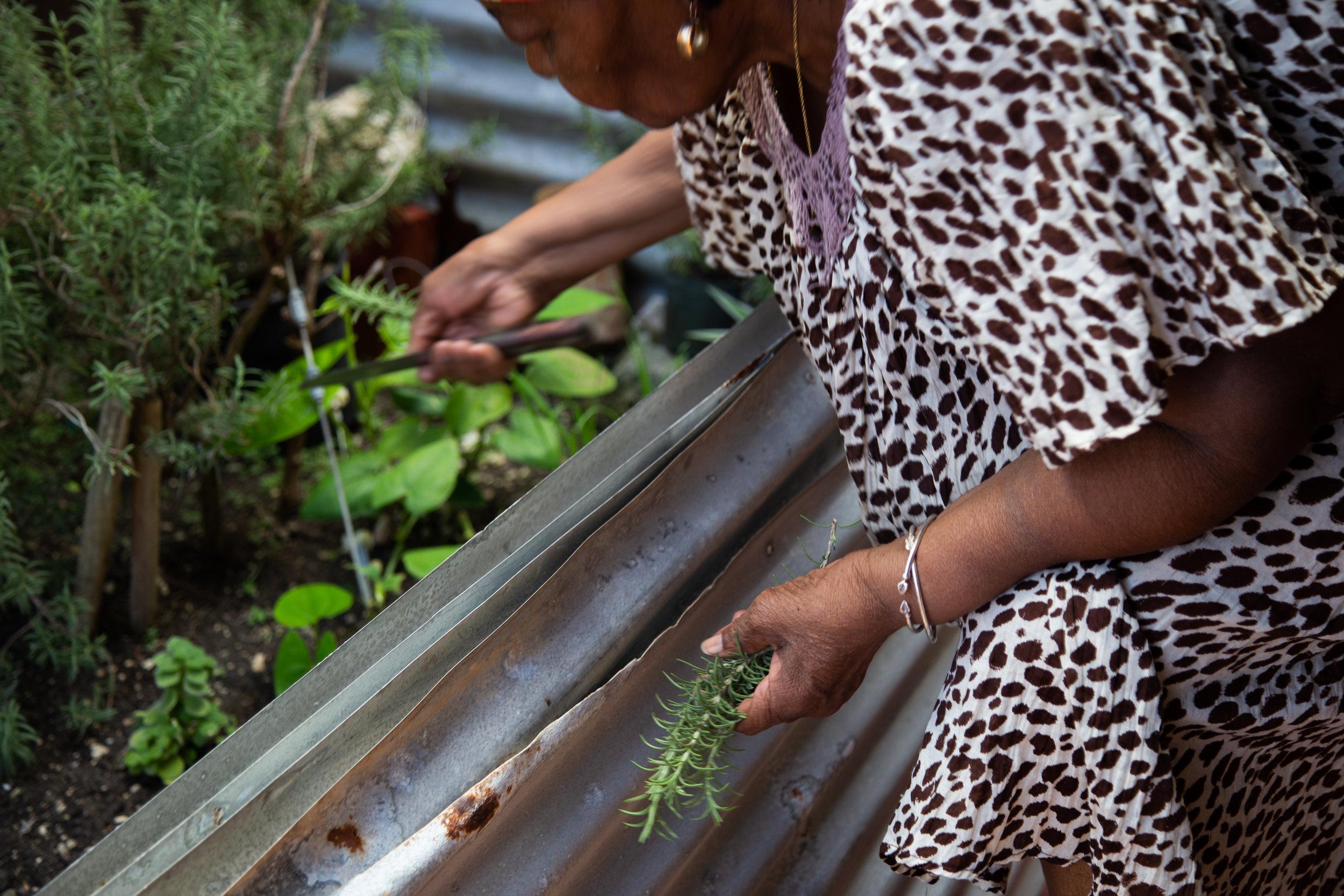Ms. Violet's Herbs, Barbados 2019.