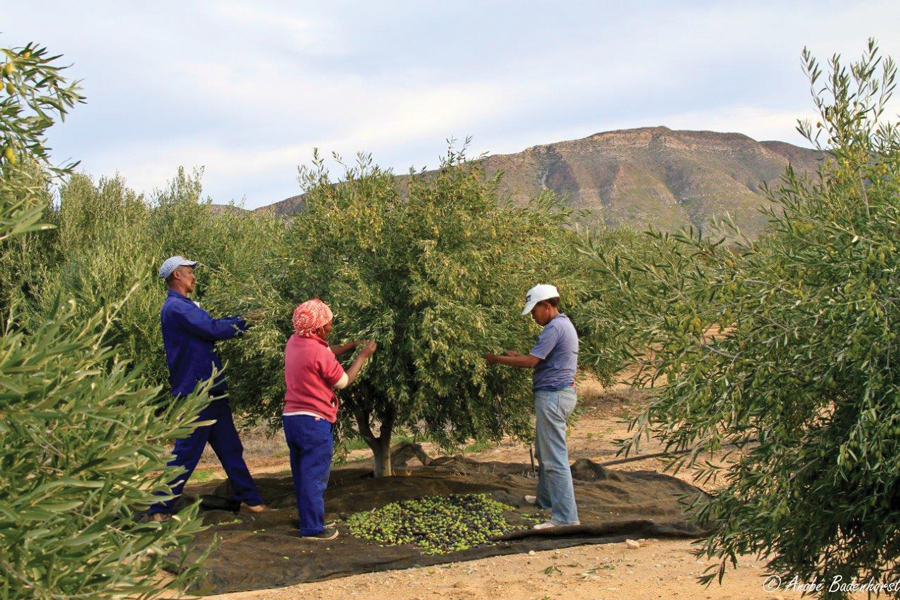 prince-slbert-olive-grove-staff.jpg
