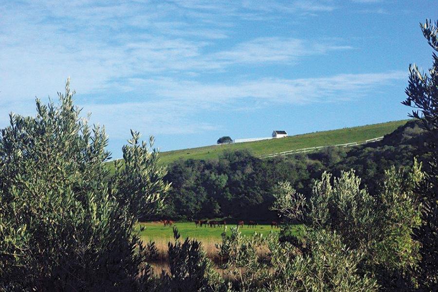 kransfontein-olives-landscape.jpg