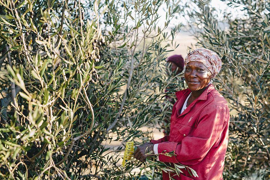 gabrielskloof-orchard-staff.jpg