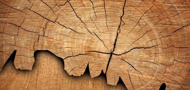 elemento terra shiatsu meridiani bra cuneo torino trattamenti shiatsu annalisa bachmann legno.jpg