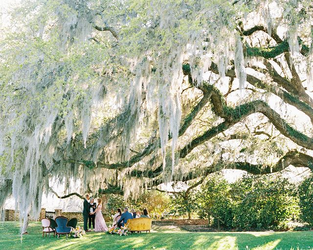 Every inch of @middletonplaceweddings is breathtaking, but we're partial to this one! An intimate ceremony under the oaks and dripping Spanish moss 💛📷 @perryvaile 📋 @pureluxebride