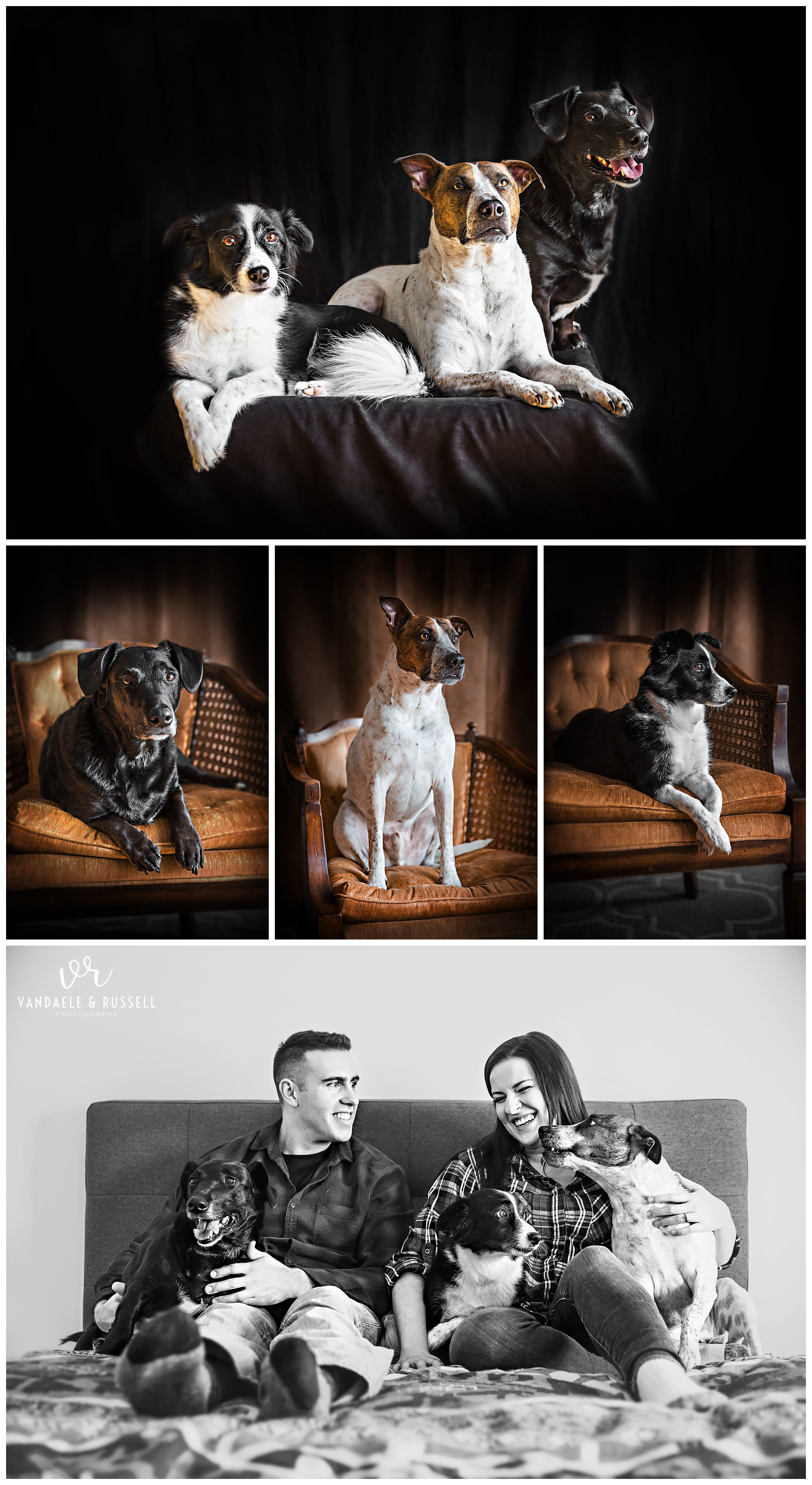 Baden, Ontario family & dog photography by VanDaele & Russell