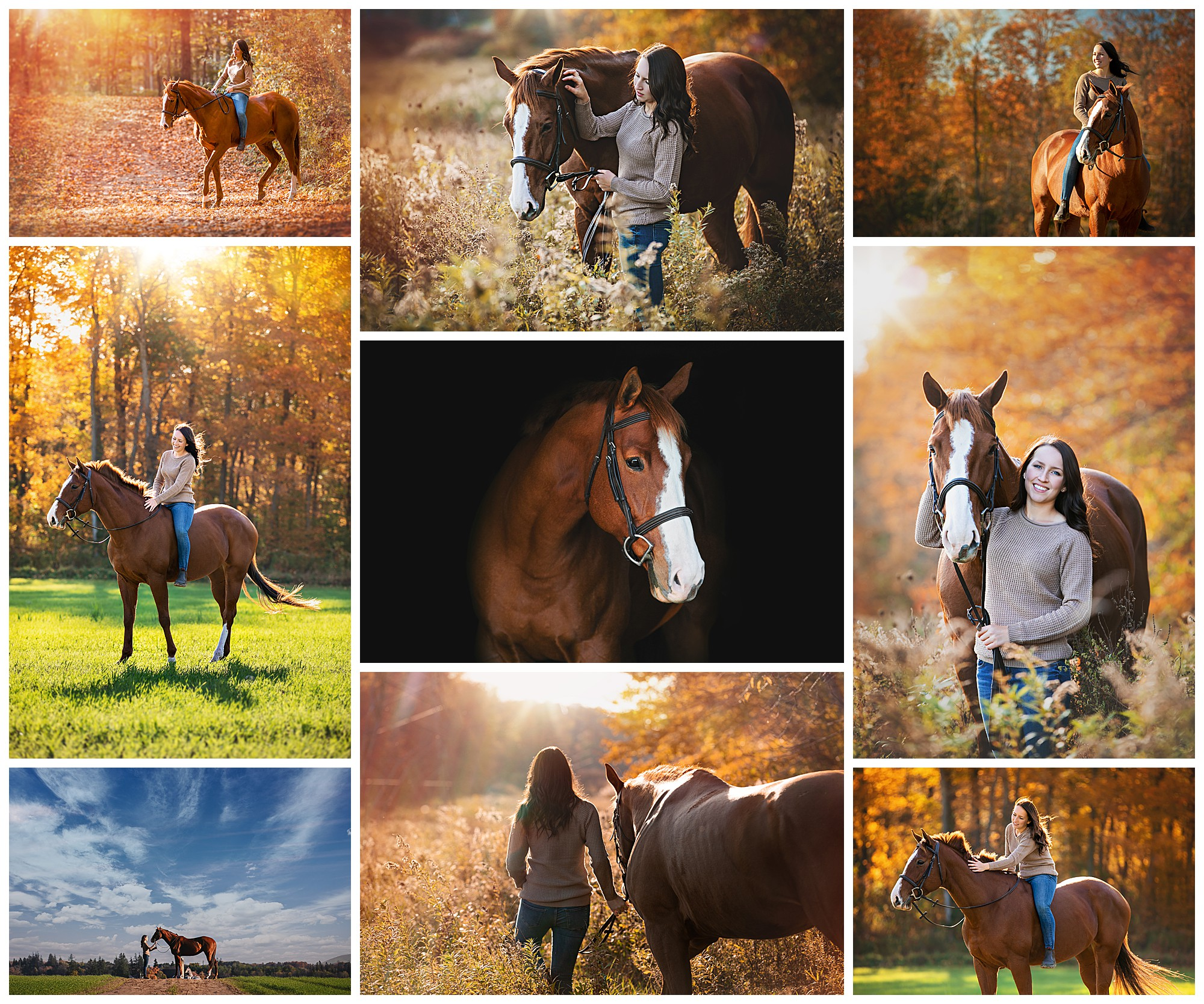Baden, Ontario equestrian photography by VanDaele & Russell