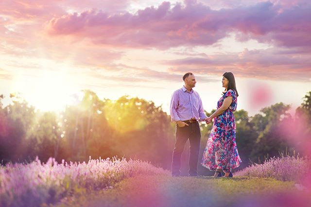 Ohhhh Terre Bleu Lavender Farm...you make us swoon 🥰🌸 Just last night at Daisy & Jeff's engagement shoot. 📸  @terrebleu @daisyyu526