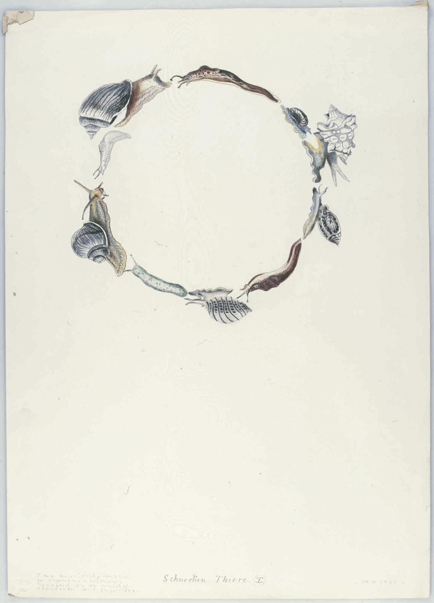 Schnecken-Tiere (I)   1965   Buntstift auf Karton   62 x 44,5 cm