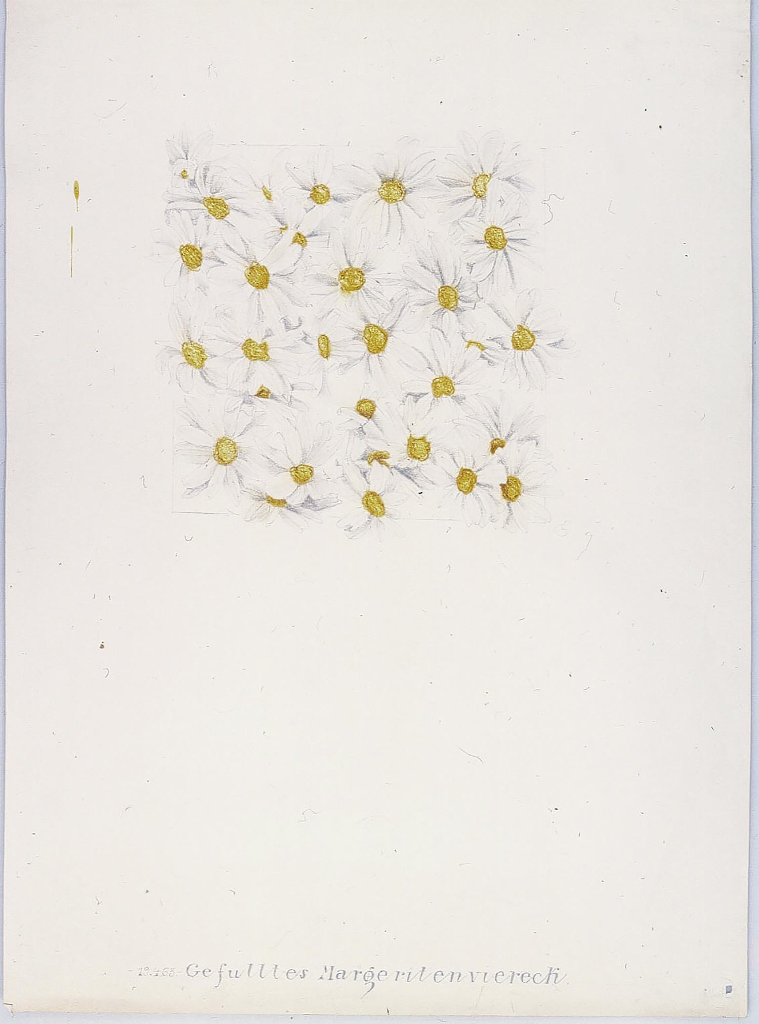 Gefülltes Margeritenviereck   1965   Bleistift und Tusche auf Karton   62 x 44,5 cm