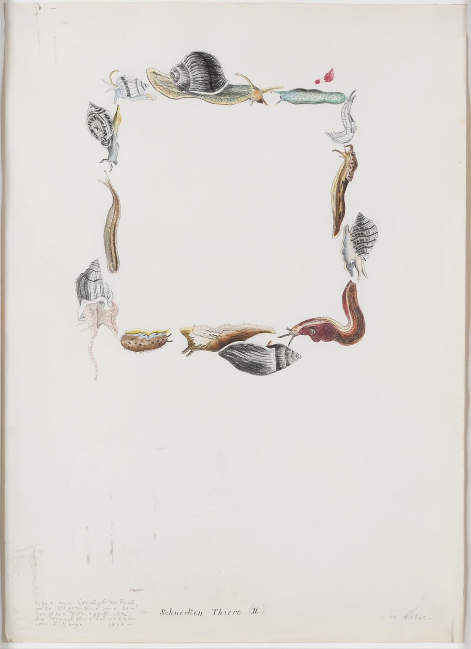 Schnecken-Thiere (II)   1965   Buntstift auf Karton   62 x 44,5 cm