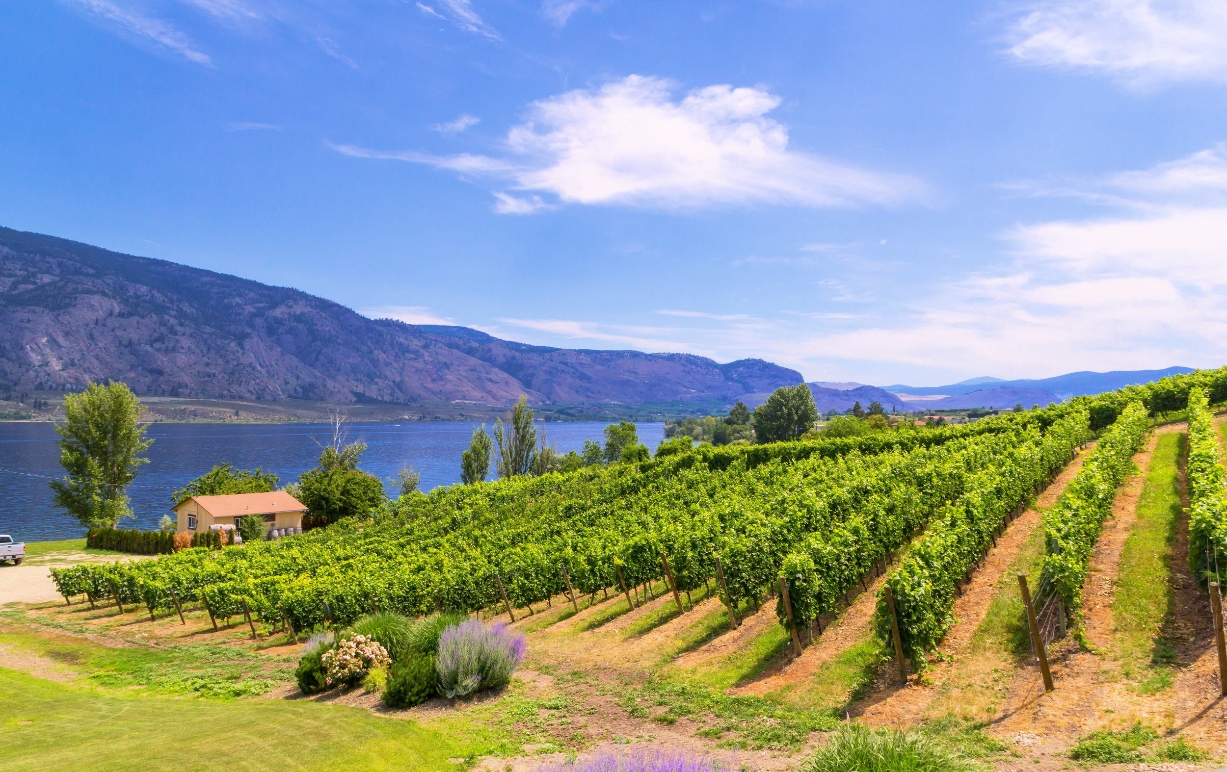 Lake Side Vineyard Tiedemann Wines