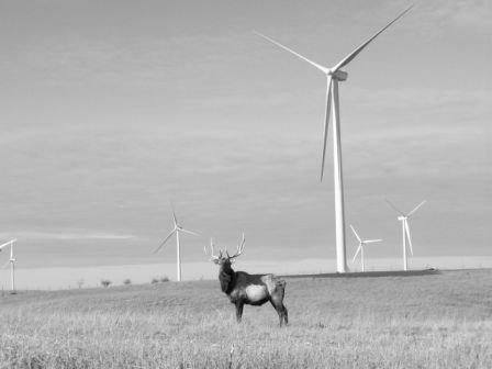 California ridge wind farm -
