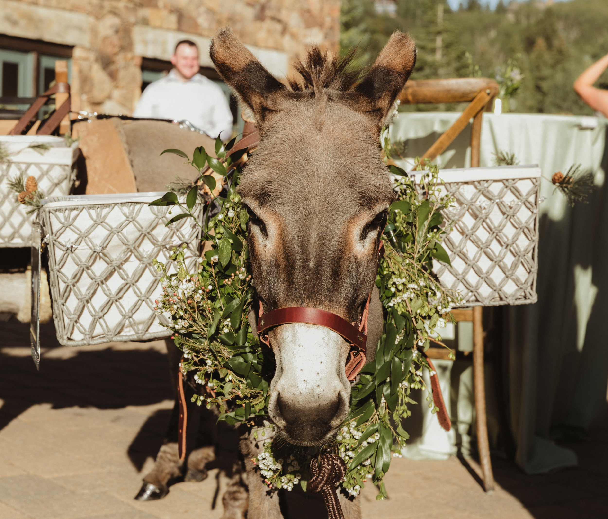beer donkey wedding