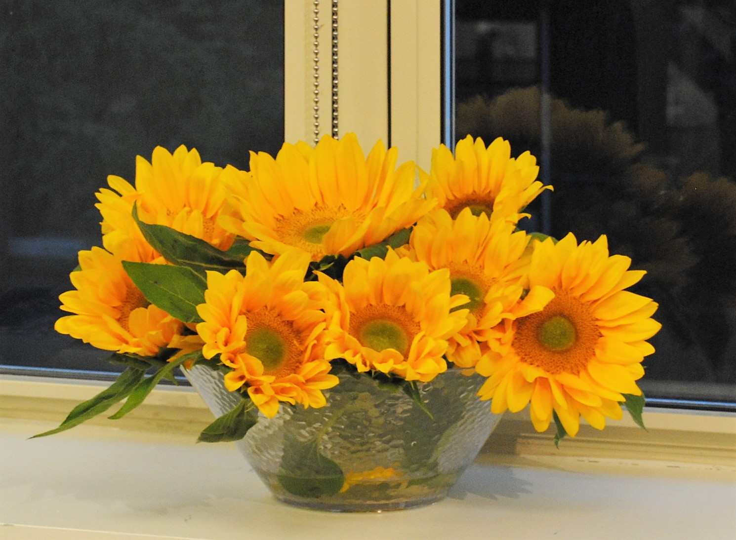 sunflowers_37012440174_o.jpg