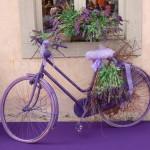 lavenderbig-revival-3-150x150.jpg