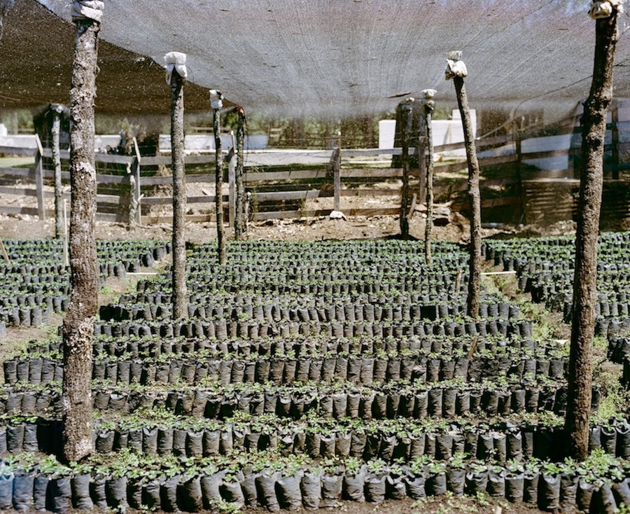A small section of the expansive nursery