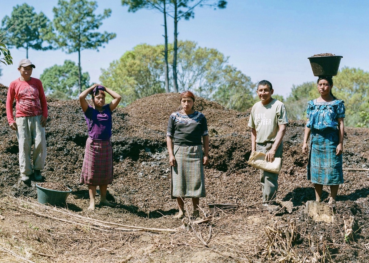 Kaqchiquel workers preparing to shuttle compost down the hill to newly dug holes. Each hole gets one basketful of compost and a baby coffee tree. The compost is made entirely off discarded coffee cherry pulp and skin, which is brought to the top of the farm in truckloads for dispersal.