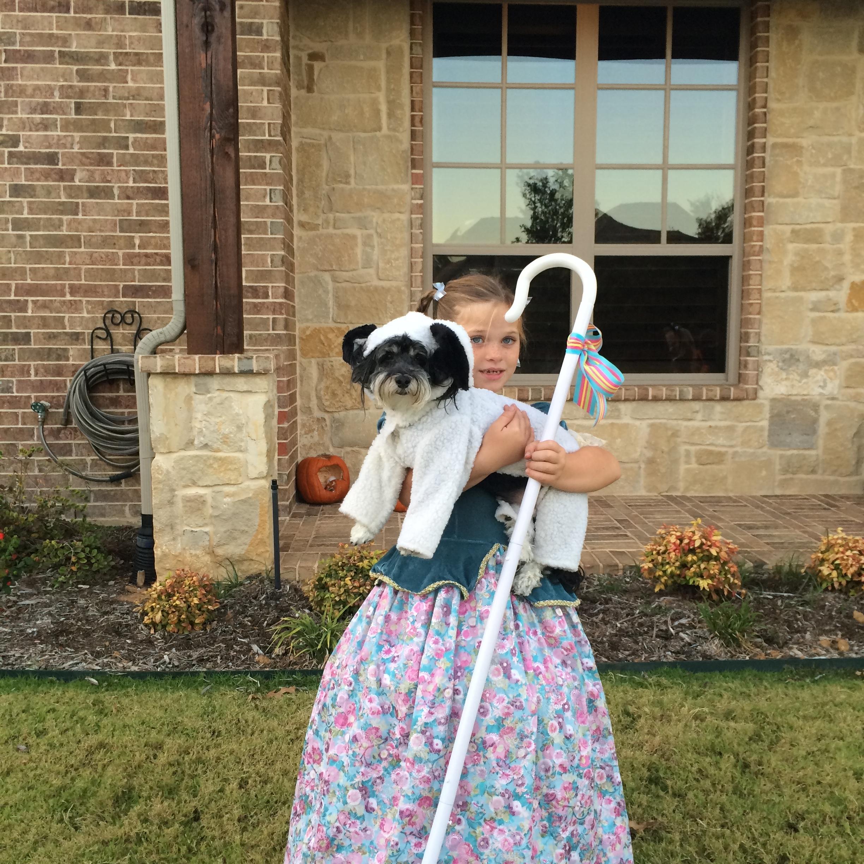 My dog Brodie trick or treating as Lil' Bo Peep's Sheep