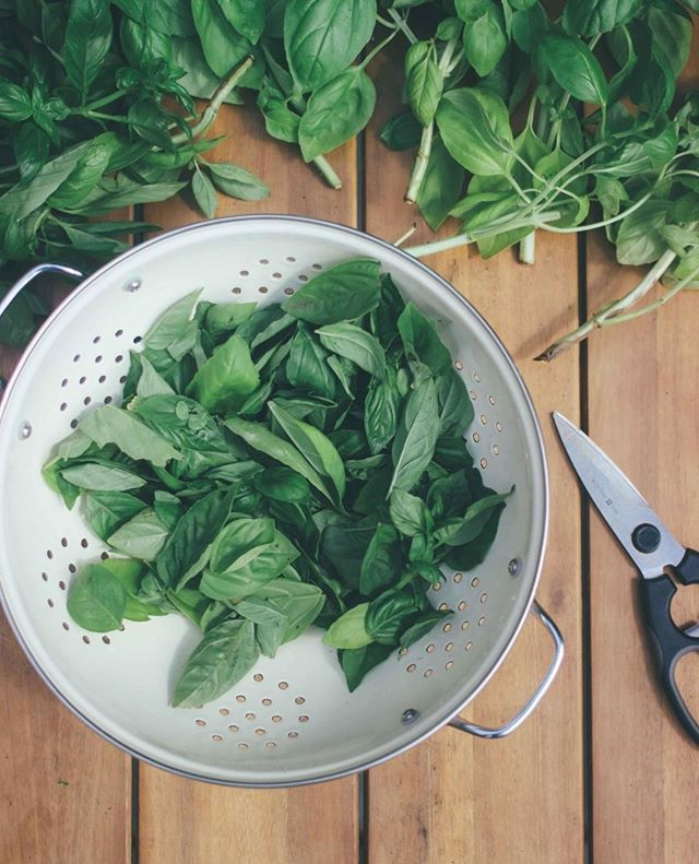 Growing your own food is one of the best ways to reconnect with nature and your local food system. Herbs are a simple way to get started that can be grown both inside and outside in even the smallest of spaces. #thewellimpact⁣ .⁣ .⁣ .⁣ #slowfoodvt #growyourownfood #eatlocal #herbalism #homegrown