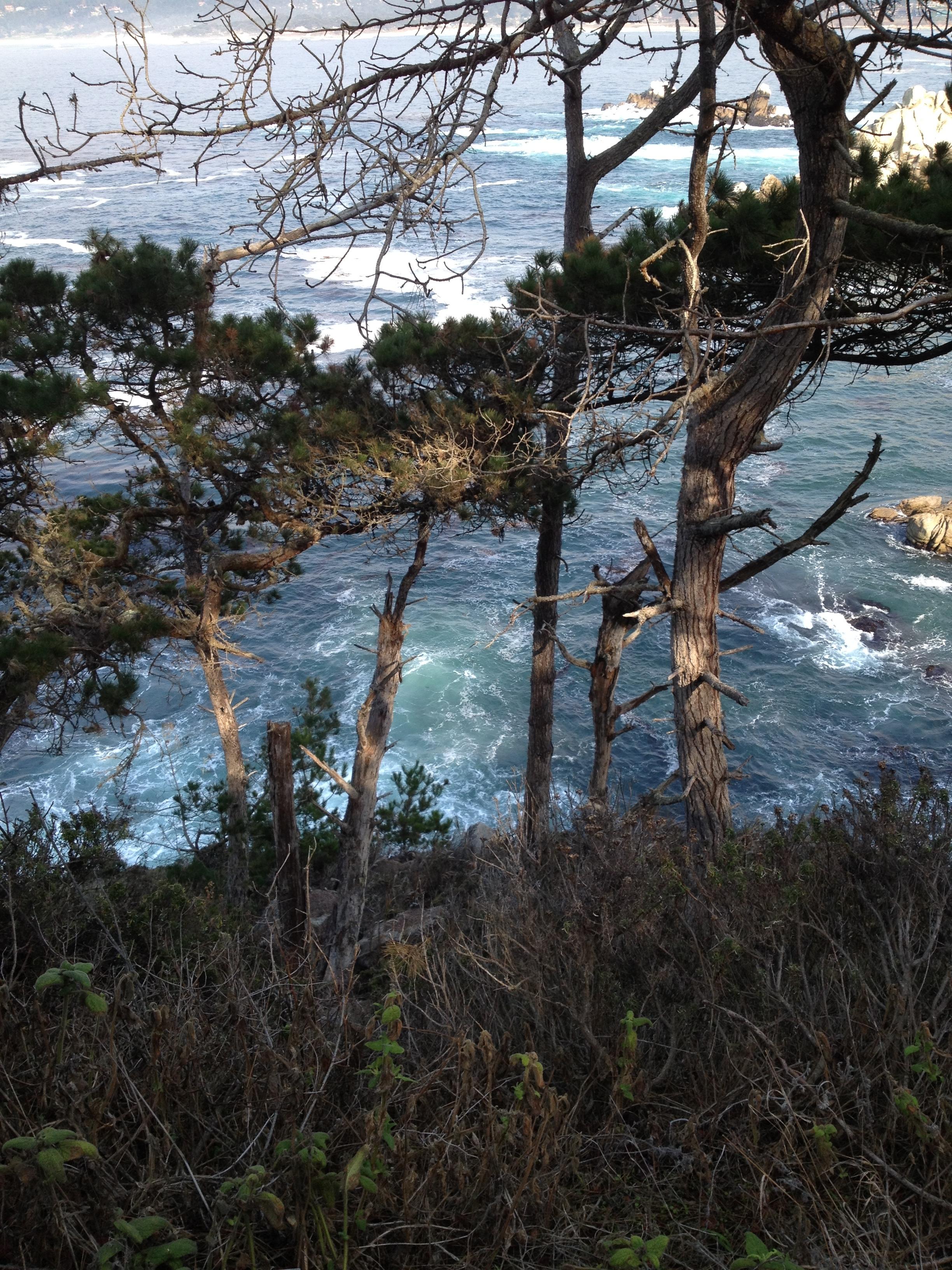 Point Lobos, CA - November 2015