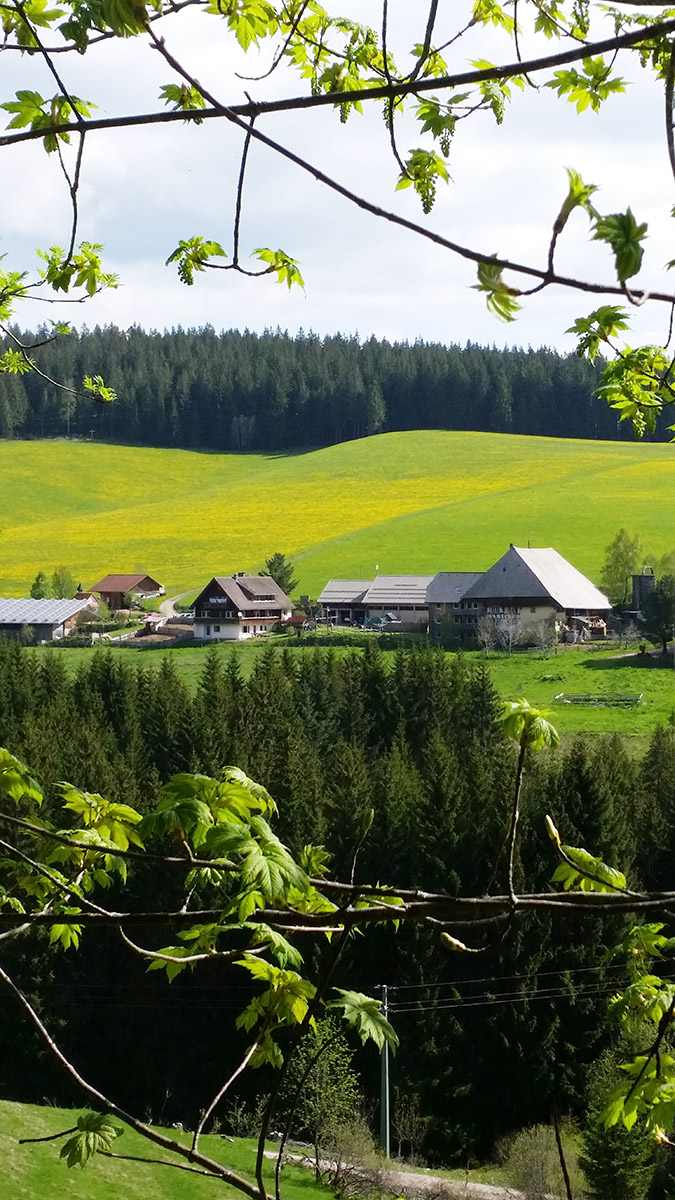 Farnbaurenhof in Schönwald. The Black Forest is not some far remote place, but still has many quiet valleys and large forests to wander through.