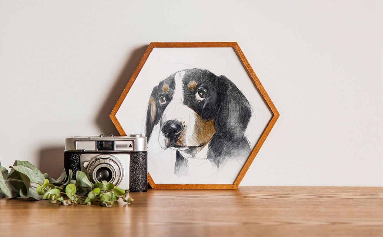 puppy_hexframe.jpg