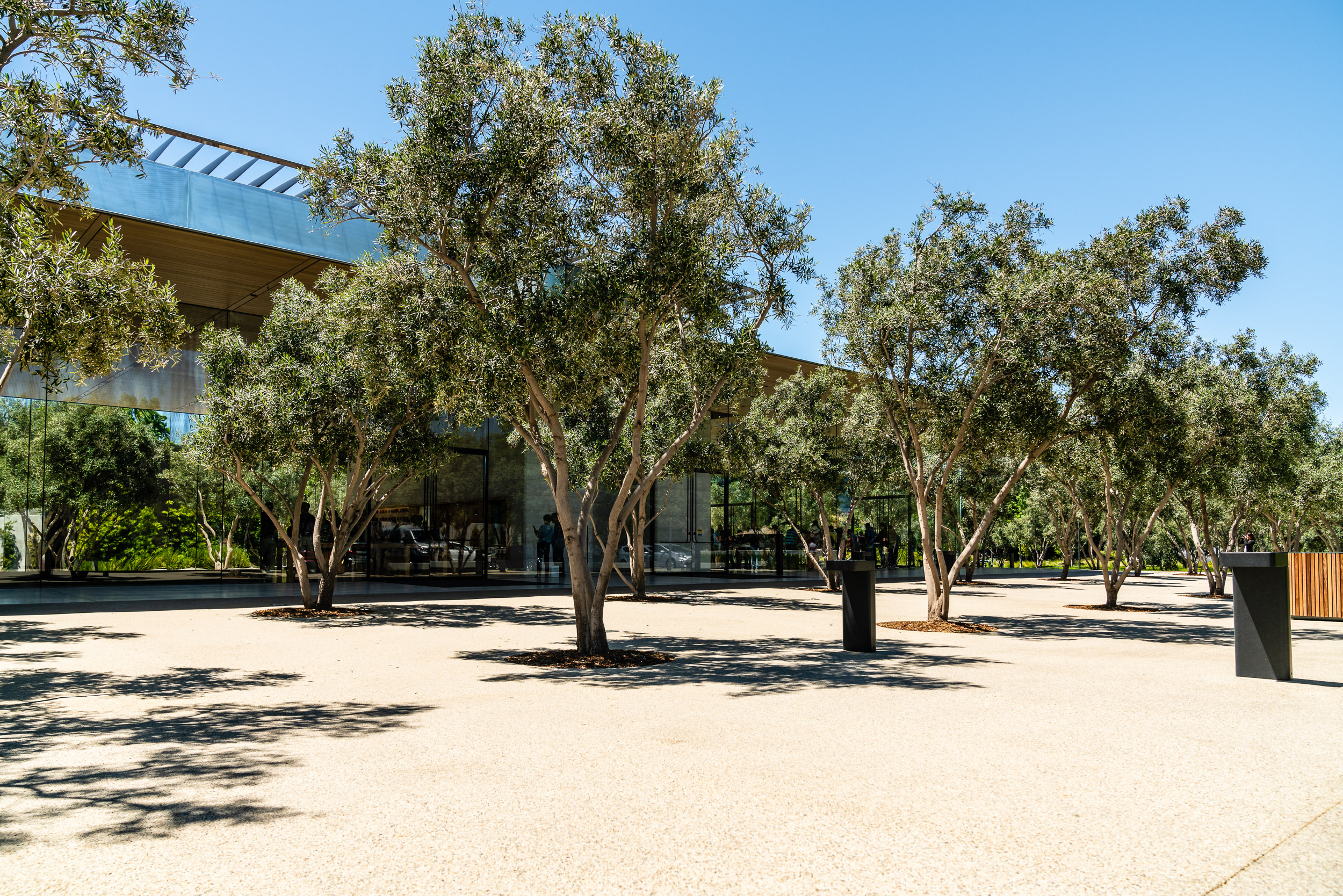 Give it another year or so for these trees to be completely grown and the courtyard should be properly lush.