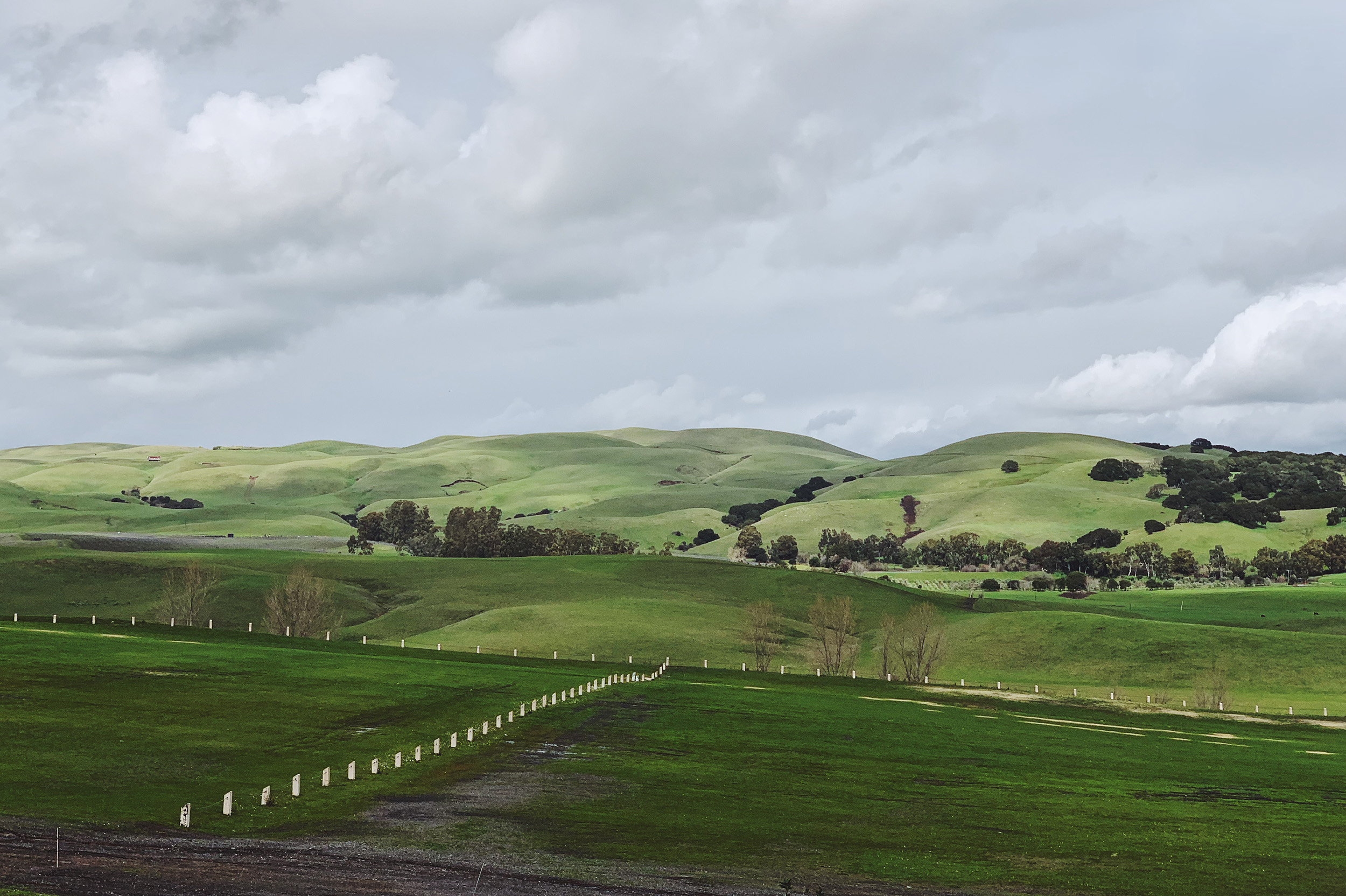 The rolling hills of Sonoma.