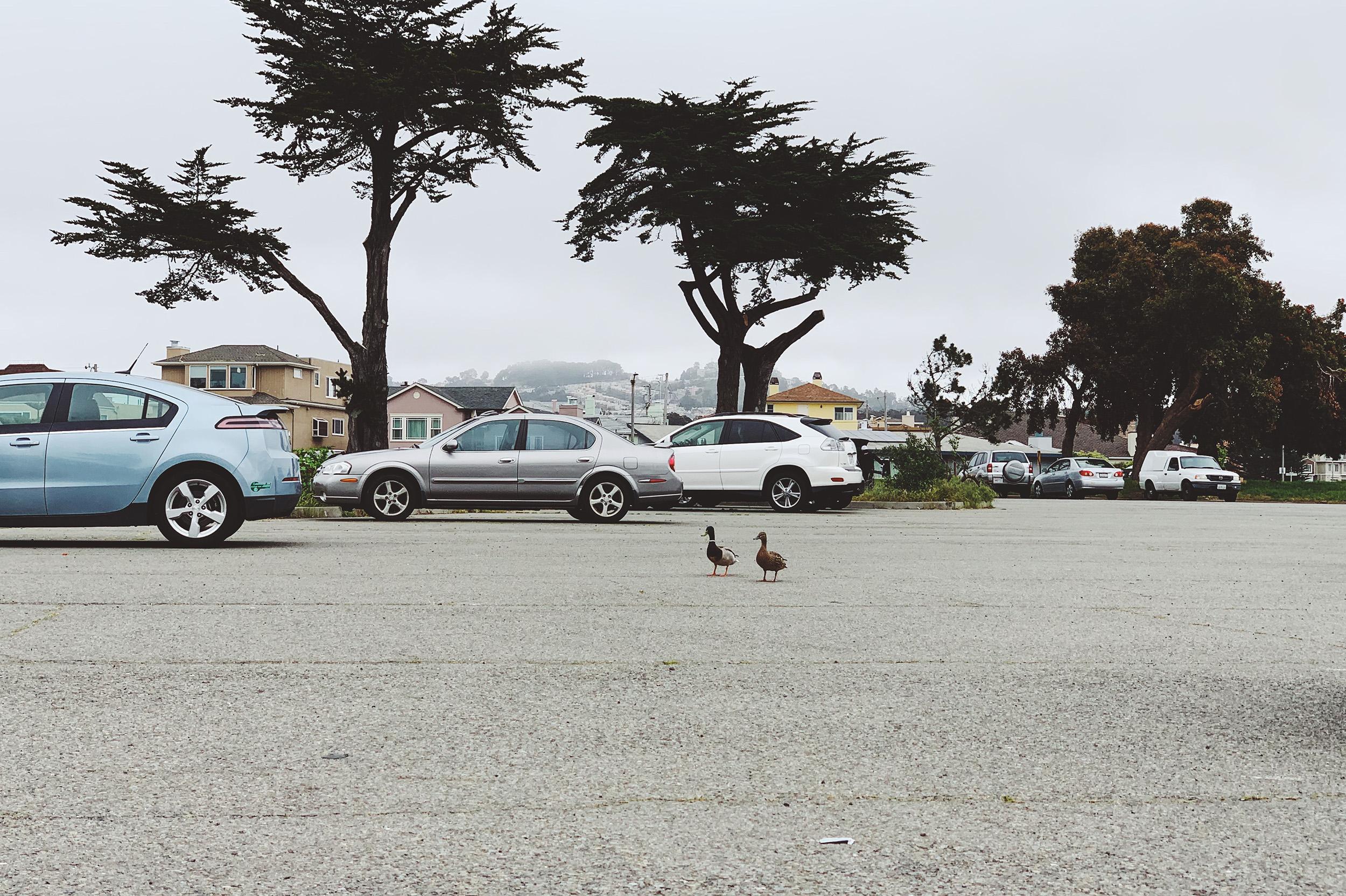 Duck season.