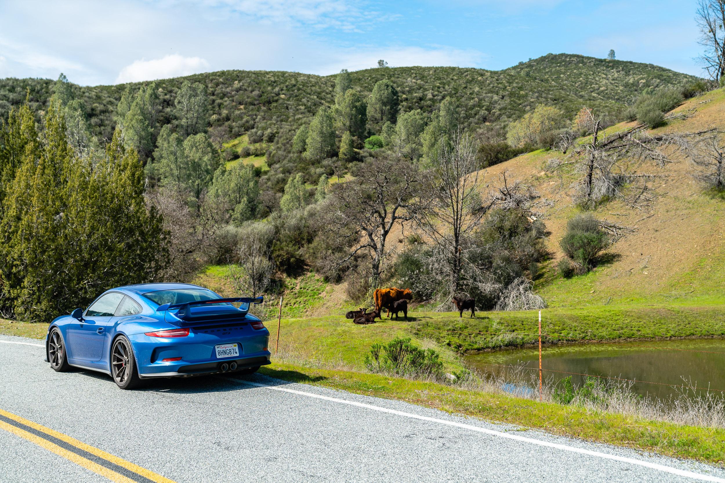 porsche-gt3-mines-road-cows.jpg