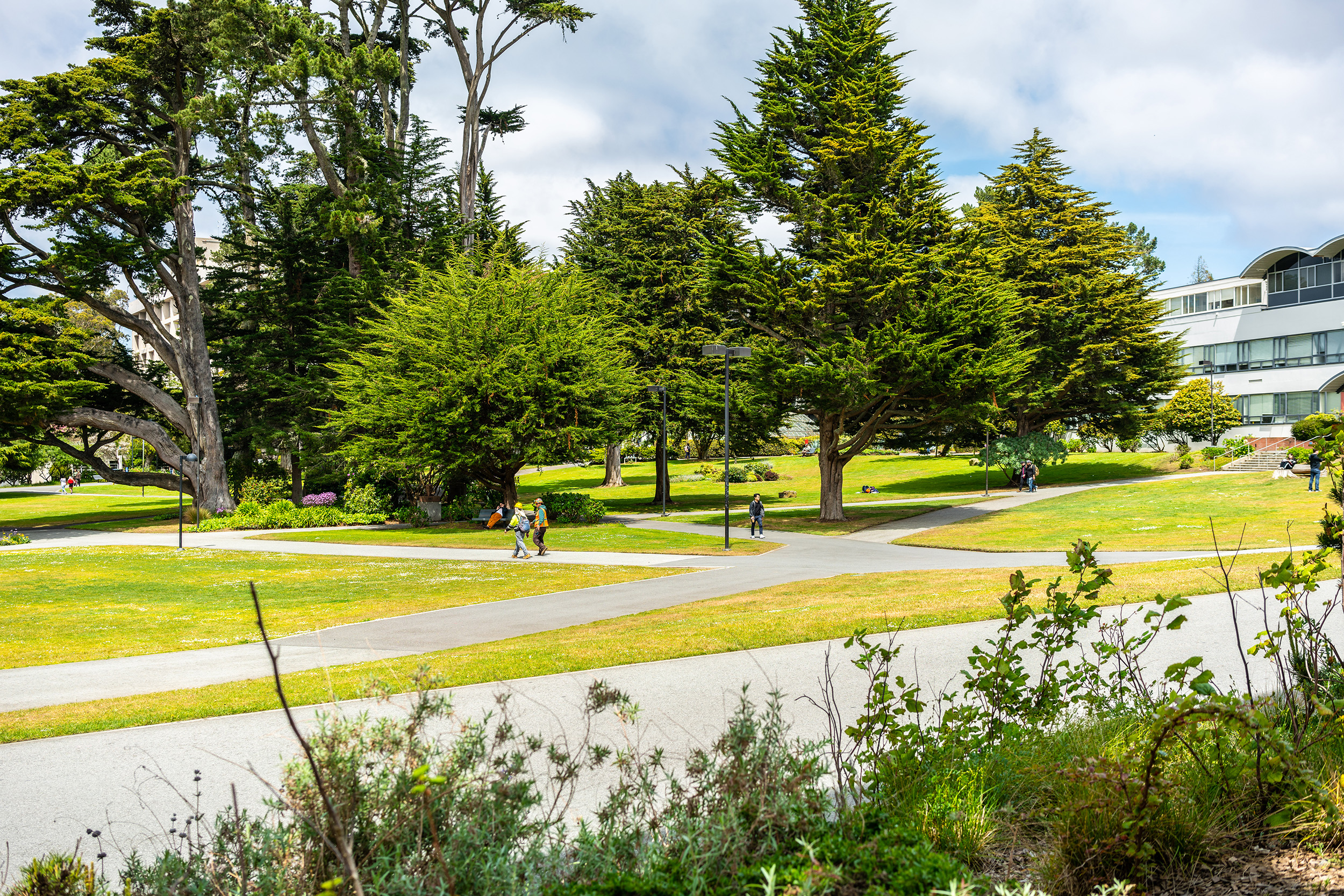 Sunny afternoons on campus. Or what passes for sunny in San Francisco anyways.