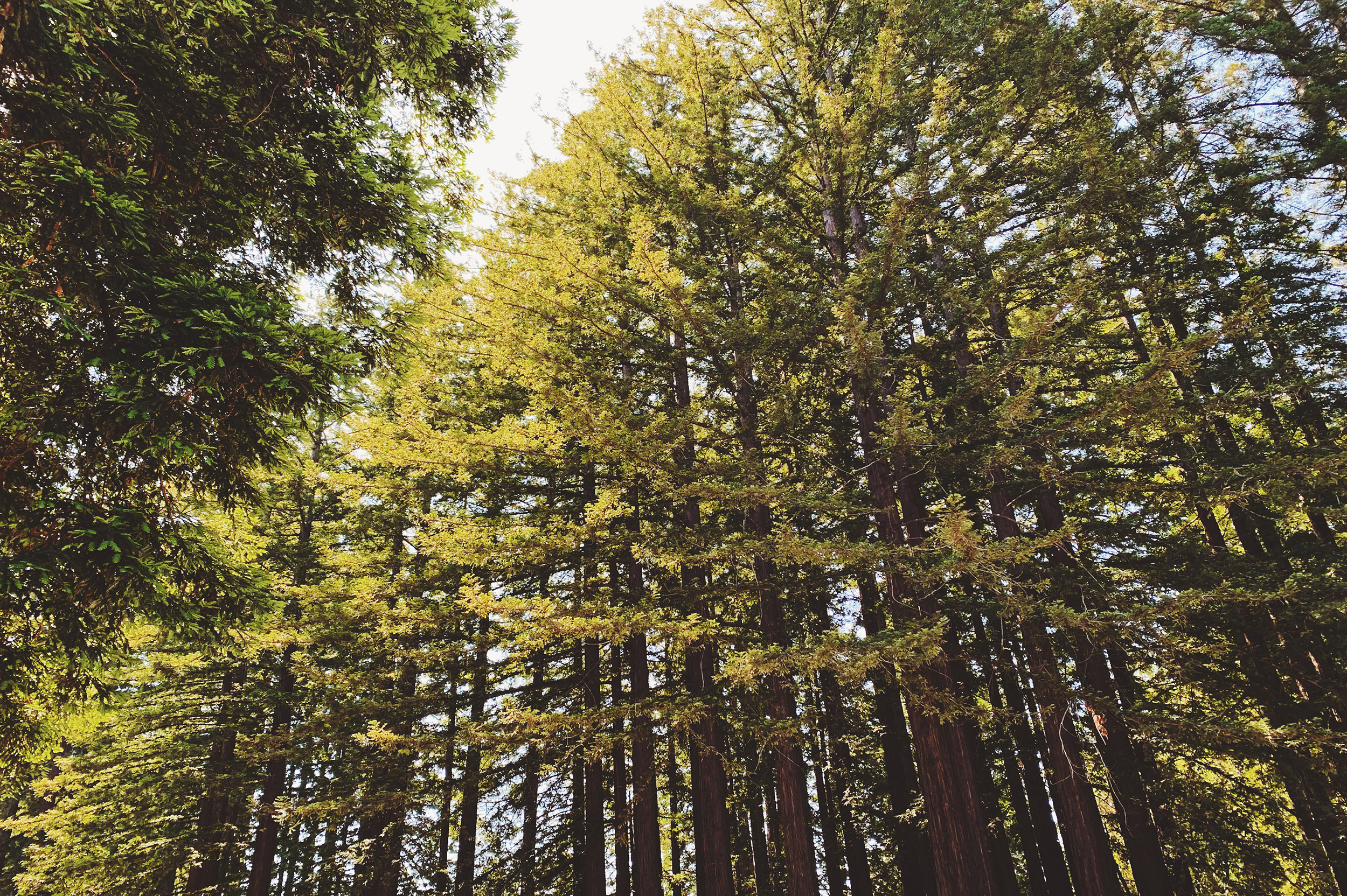 UC Santa Cruz: a beautiful campus nestled within a redwood forest.