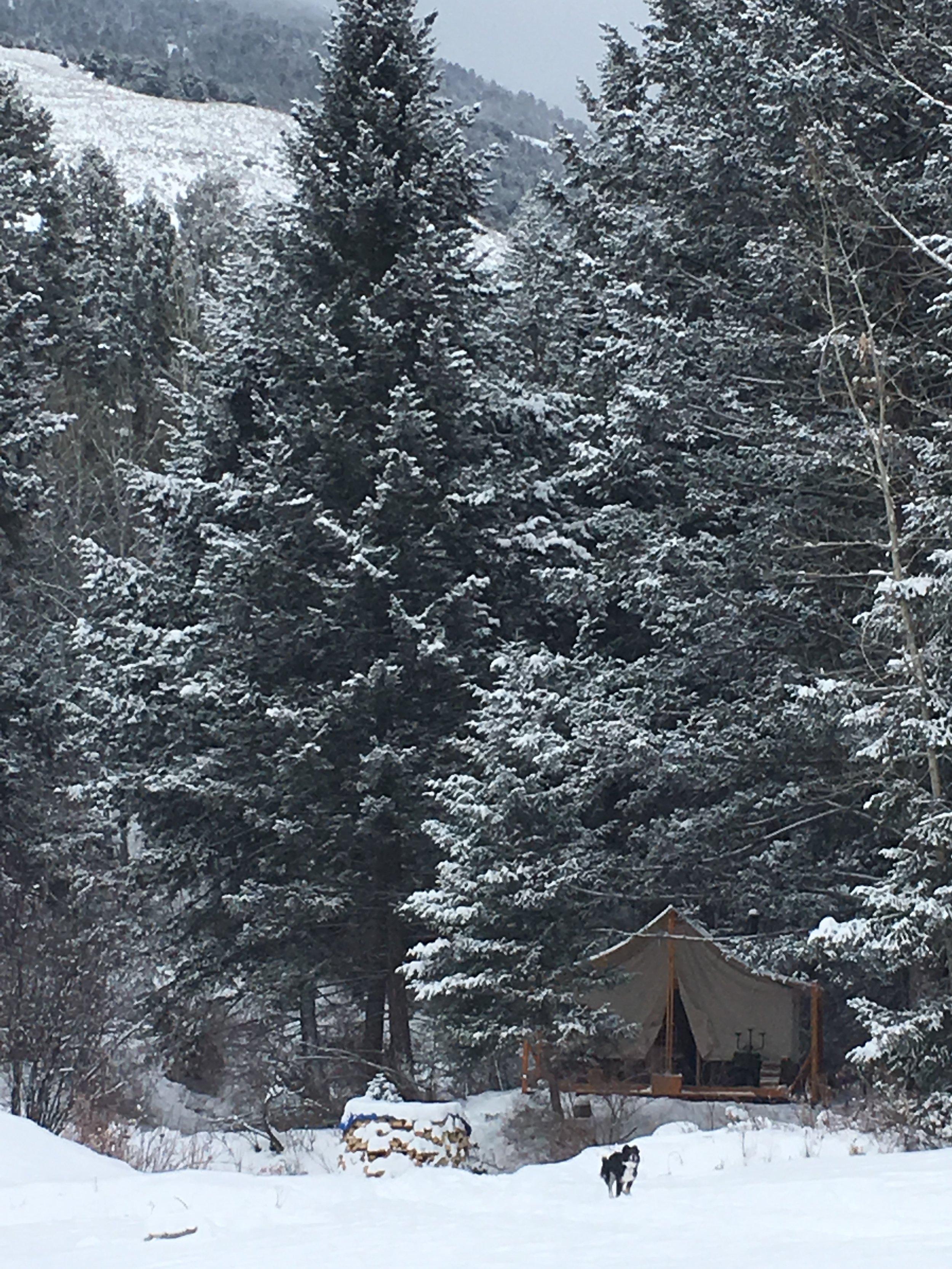 snowtent dog far.jpg