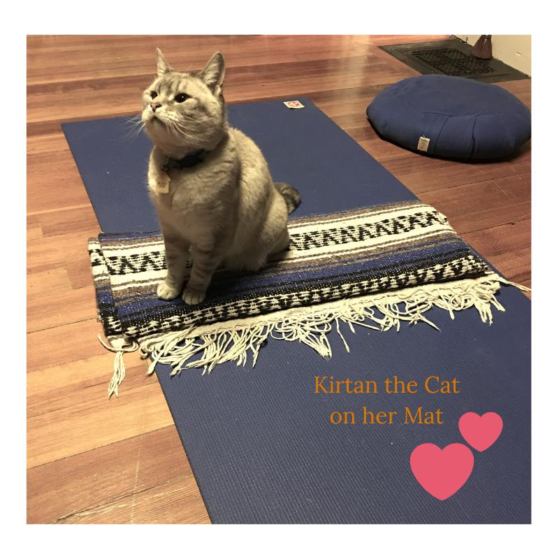 Kirtan the Cat on her Mat.png