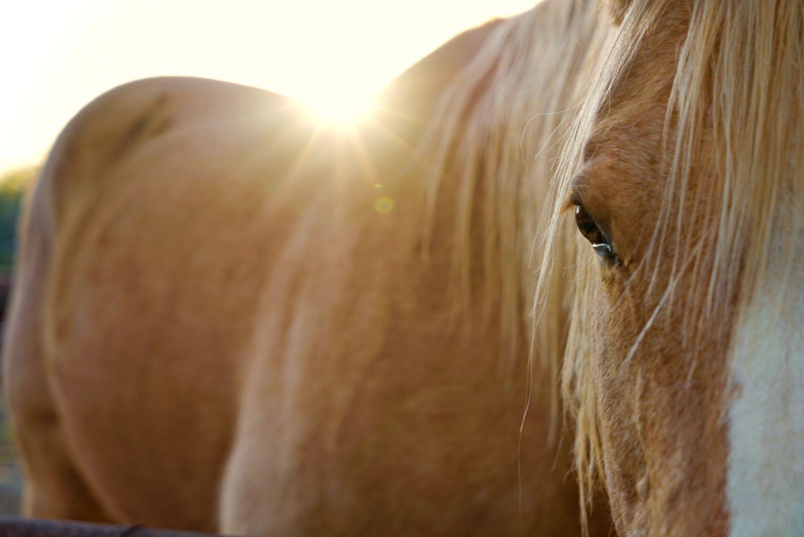 a_horse_a.jpg
