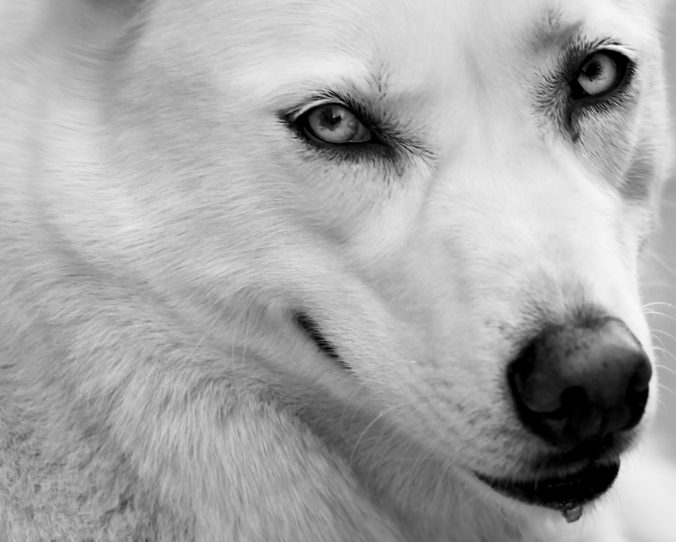 IMG_3907_connah's_dog_2_crop_2_bw_a.jpg