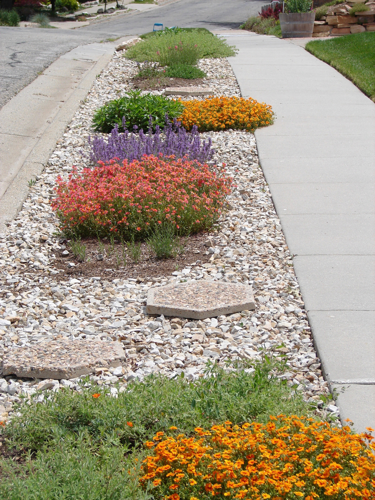Drought landscaping design in long beach