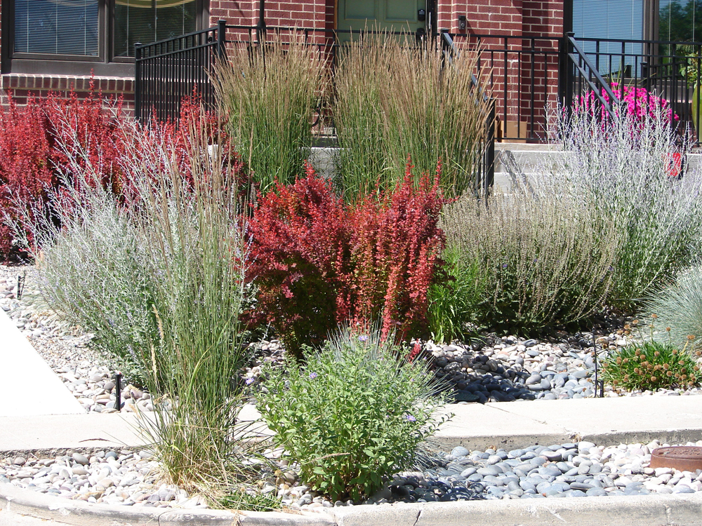 Drought Landscaping