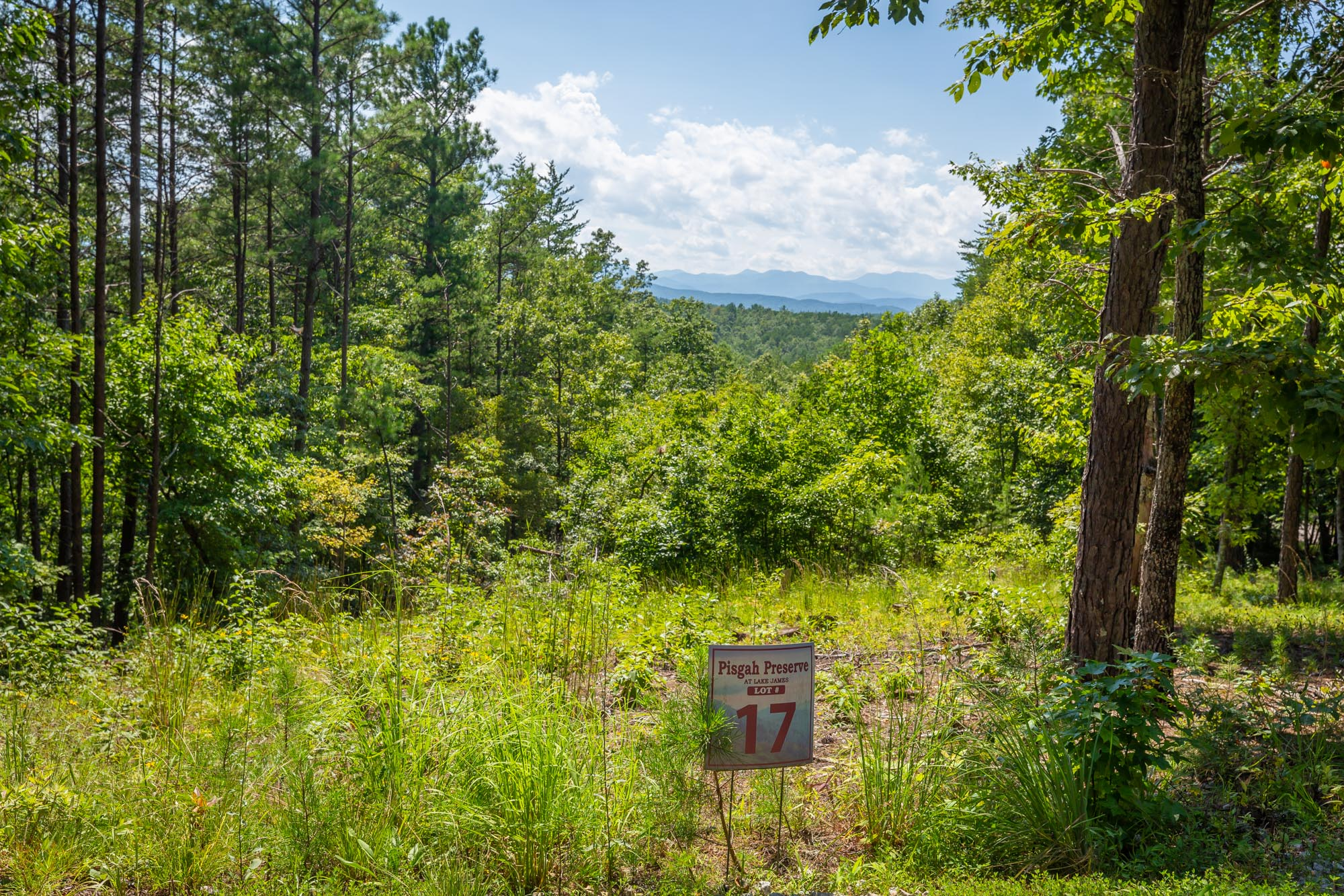 Pisgah Preserve Lot 17.jpg