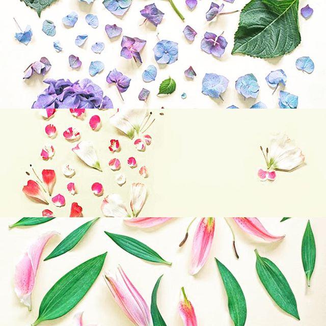 Deconstruction of a Flower -