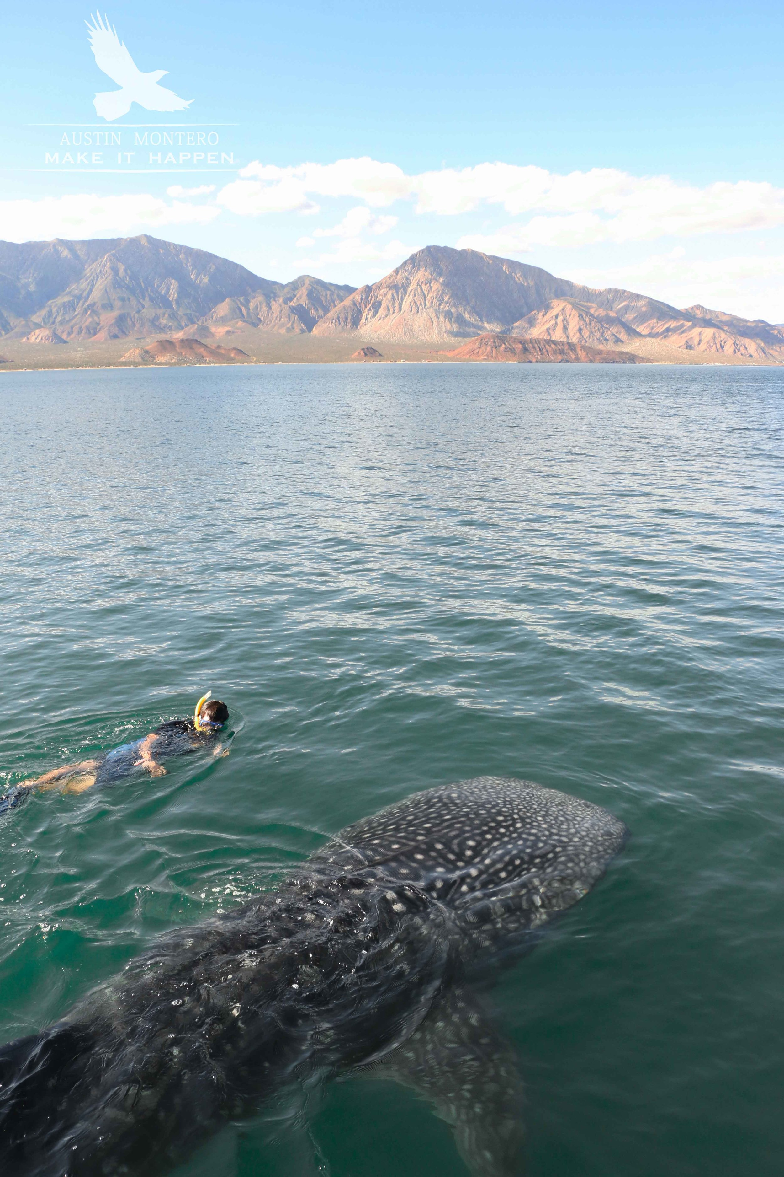 Whale shark interaction (Austin Montero)-2red.jpg