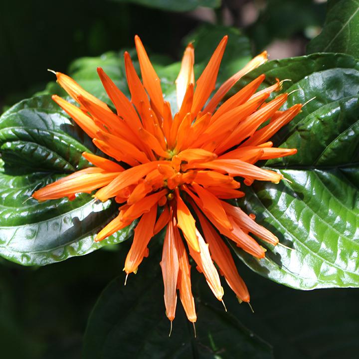 Sq Flower 3.jpg